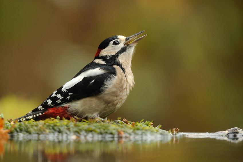 15 des plus belles esp ces d 39 oiseaux du luberon for Liste oiseaux des jardins