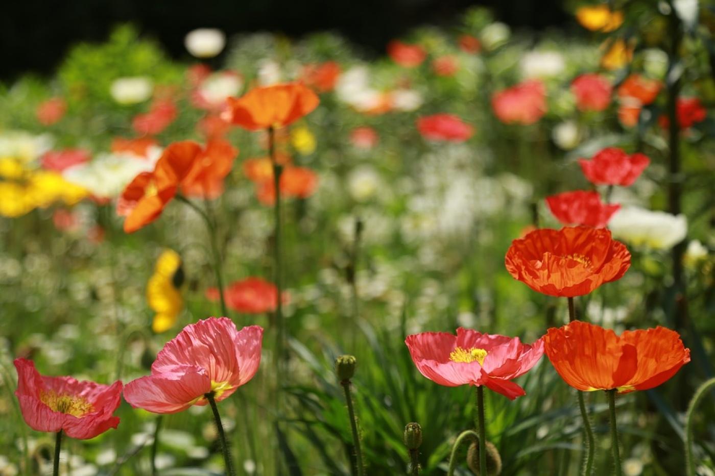 Arbuste Fleuri Feuillage Persistant flore du luberon - liste des arbres et des plantes